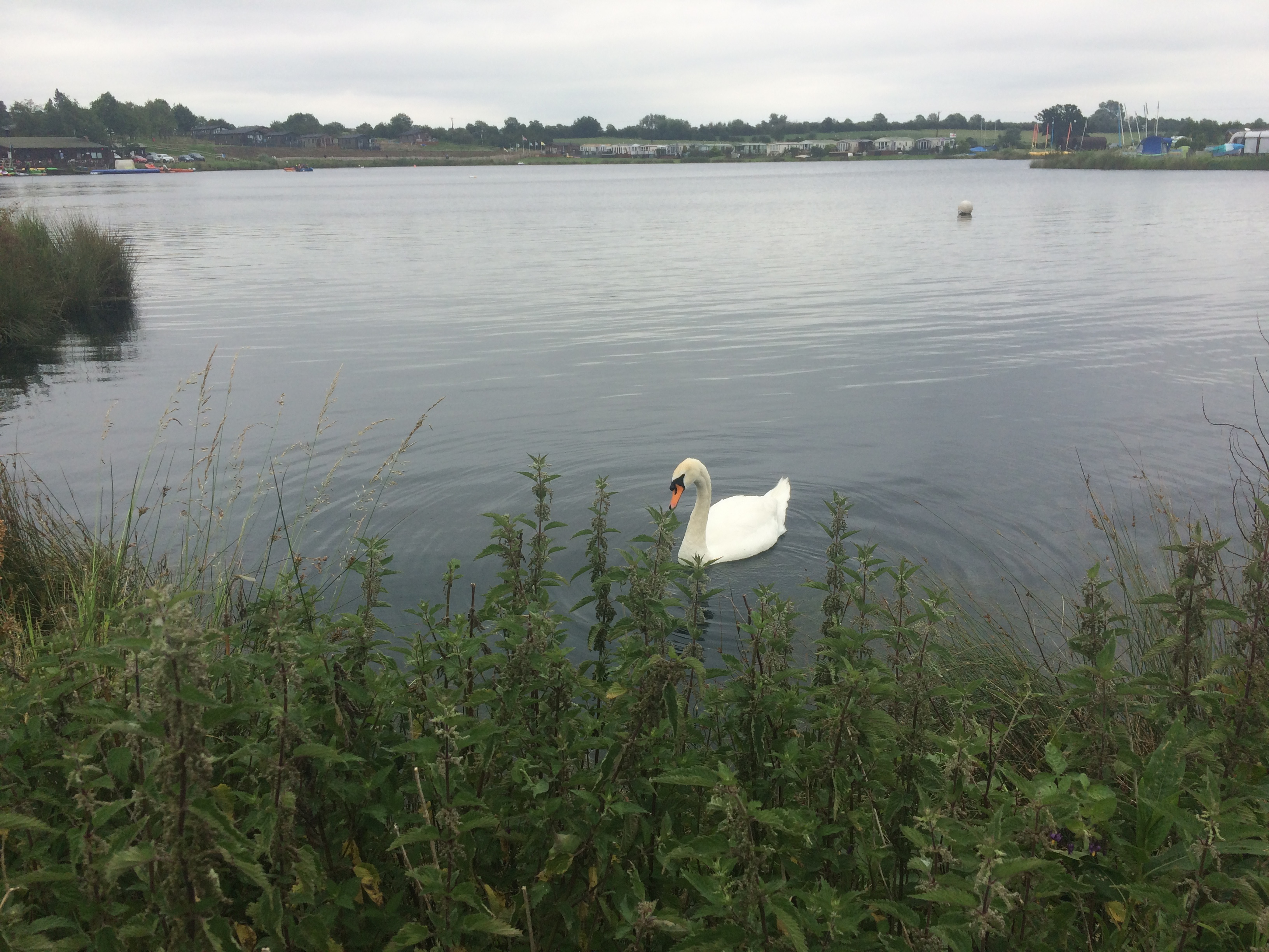 a swan on the lake at croft farm waterpark