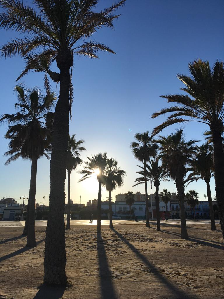 palm trees on the beach in valencia